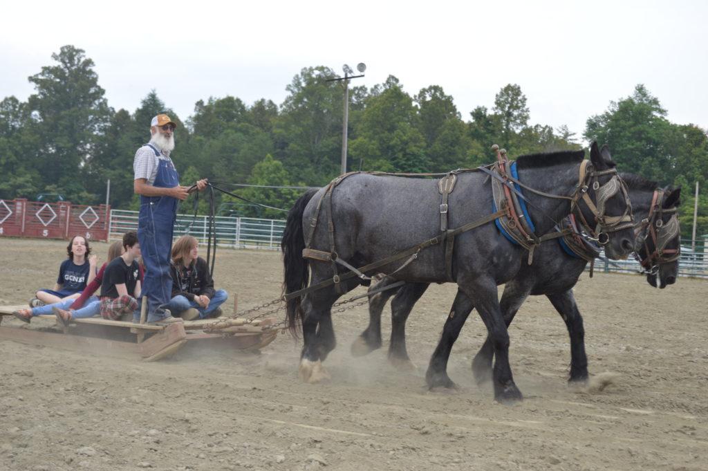 horse pulling kids