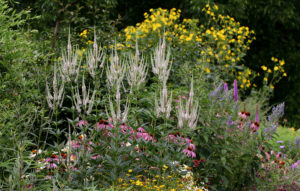 Cover photo for Take a Virtual Tour of the Pollinator Paradise Garden!