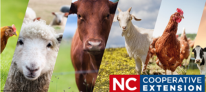 Cover photo for Livestock Webinars