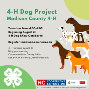 Dog Project Flyer